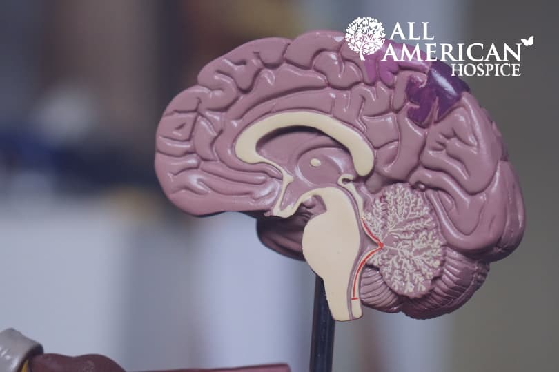 The Types and Causes of Brain Cancer